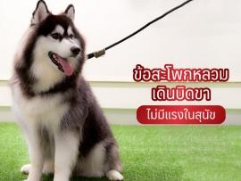 ข้อสะโพกหลวม เดินบิดขา ไม่มีแรงในสุนัข - ไซบีเรียน