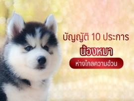 บัญญัติ 10 ประการ น้องหมา ห่างไกลความอ้วน - ไซบีเรียน