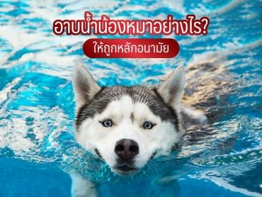 อาบน้ำน้องหมาอย่างไรให้ถูกหลักอนามัย - ไซบีเรียน