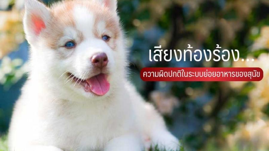 เสียงท้องร่วง ความผิดปกติในระบบย่อยอาหารของสุนัข - ไซบีเรียน