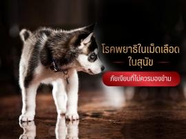 โรคพยาธิในเม็ดเลือด ในสุนัข ภัยเงียบที่ไม่ควรมองข้าม - ไซบีเรียน