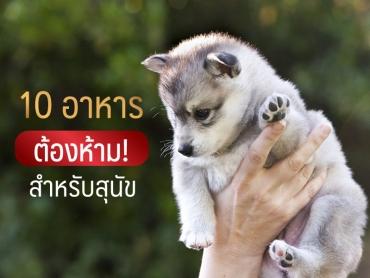 10 อาหารต้องห้าม สำหรับสุนัข - ไซบีเรียน