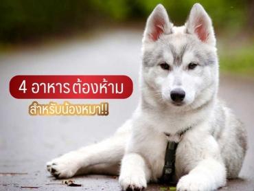 4 อาหารต้องห้าม สำหรับน้องหมา - ไซบีเรียน