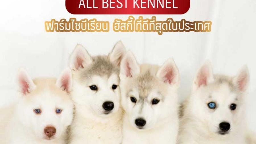 all best kennel ฟาร์มไซบีเรียน ฮัสกี้ ที่ดีที่สุดในประเทศไทย