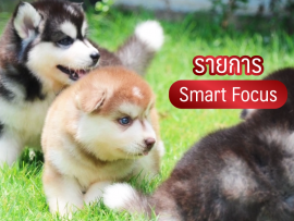 รายการ smart focus - all best kennel