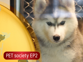 PET society EP2 - all best kennel