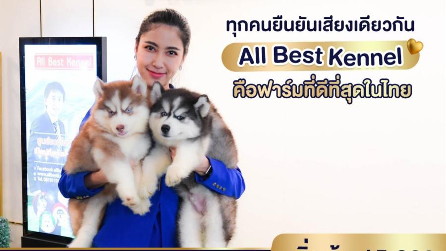All Best Kennel ฟาร์มไซบีเรียนที่ดีที่สุดในไทย